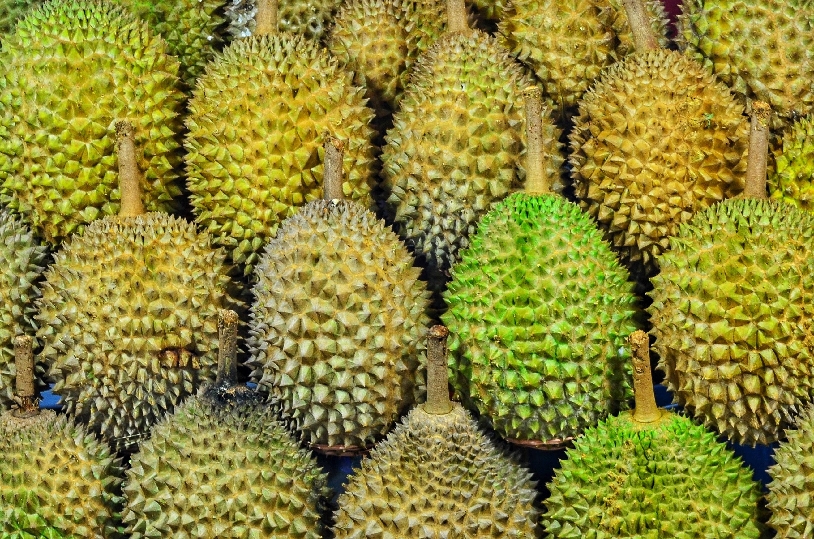 Durian Expo